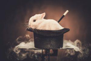 konijn hoge hoed, verrassingen