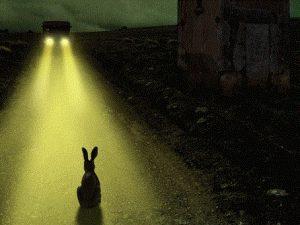 angst-verstarren-konijn